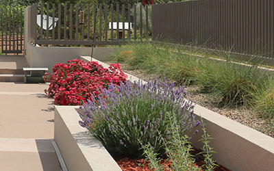 Planting Tips for Raised beds