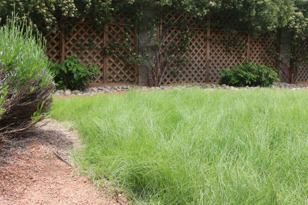 Basics About Turf Grasses For New Mexico 505 Outside