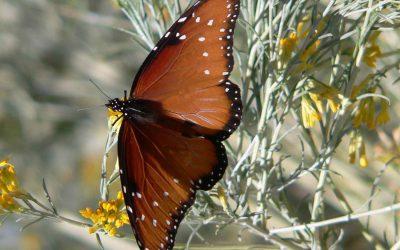 Easy Pollinator Gardening
