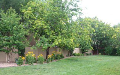 Spring Lawn Best Practices