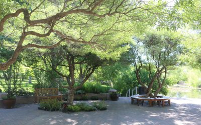 Tips to Keep Mature Trees Healthy