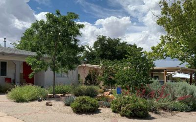 Plan Now for a Xeriscape Conversion