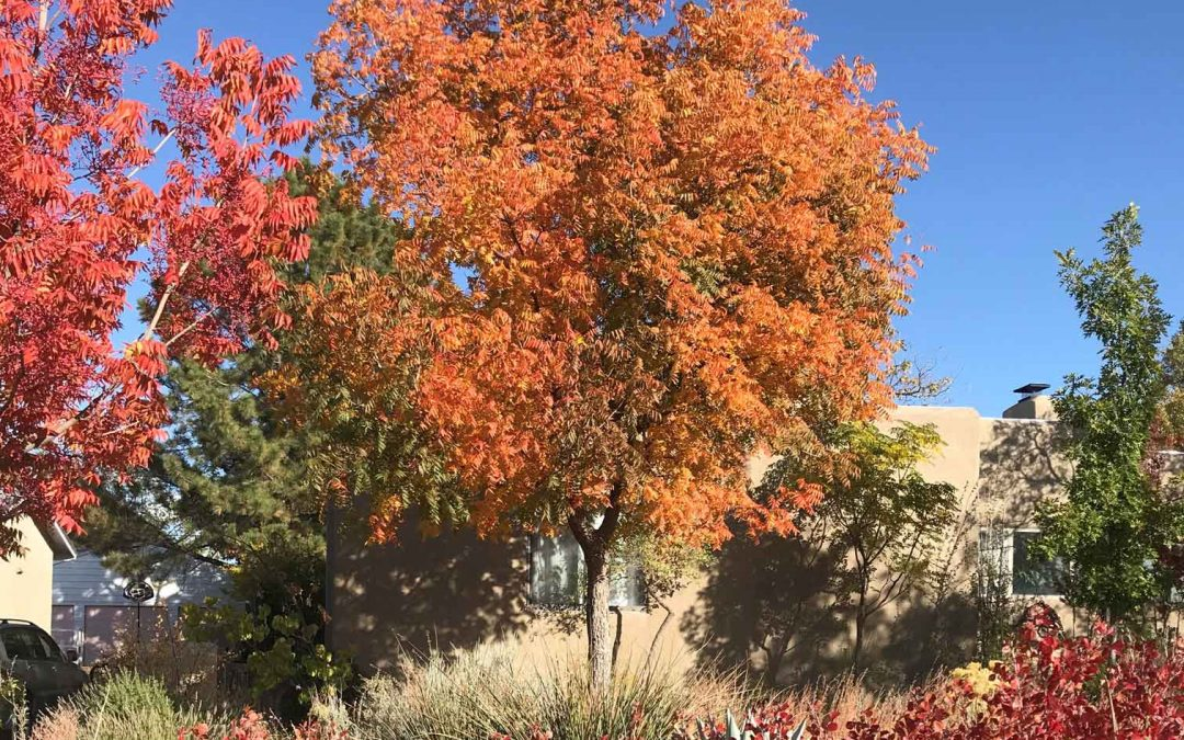 Fall desert friendly landscape
