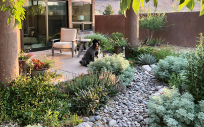 Learn How to Harvest Rainwater in Your Yard
